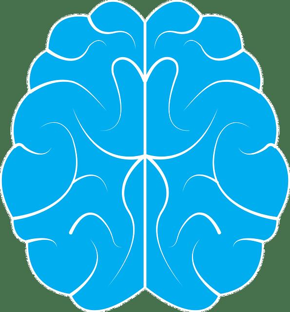Das Gehirn, Tianeptin und seine Wirkung.